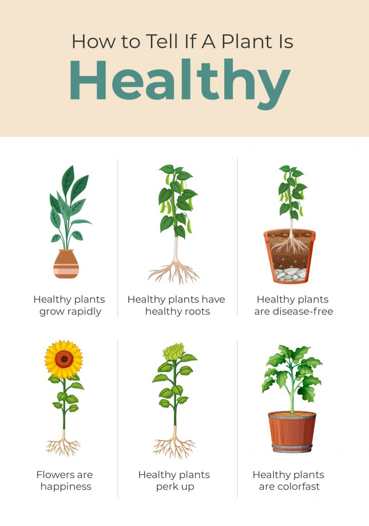 How to Tell if a Plant if Healthy - Infographic with Points
